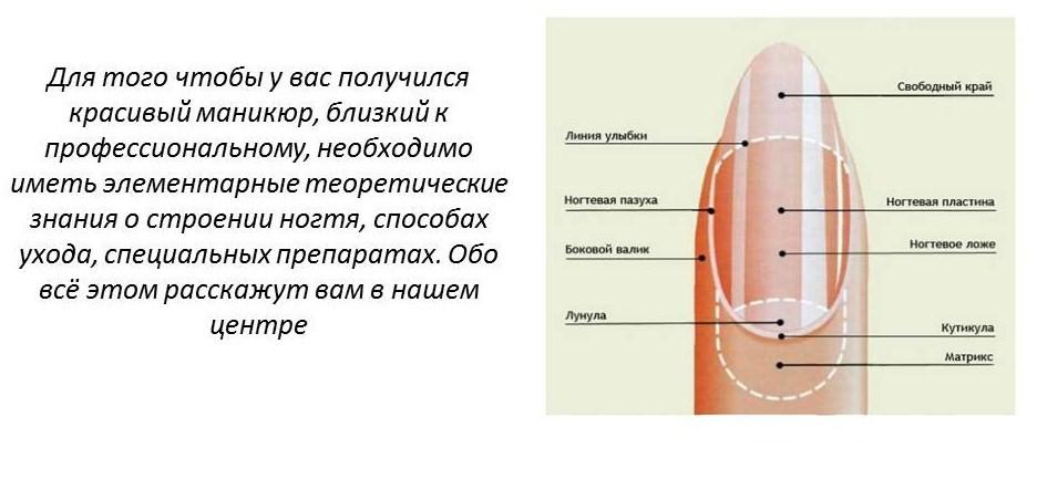 теория о строении ногтя